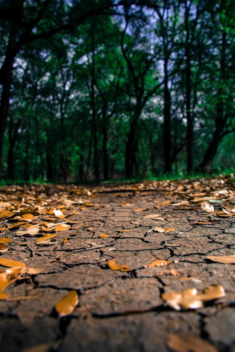 dry sidewalk